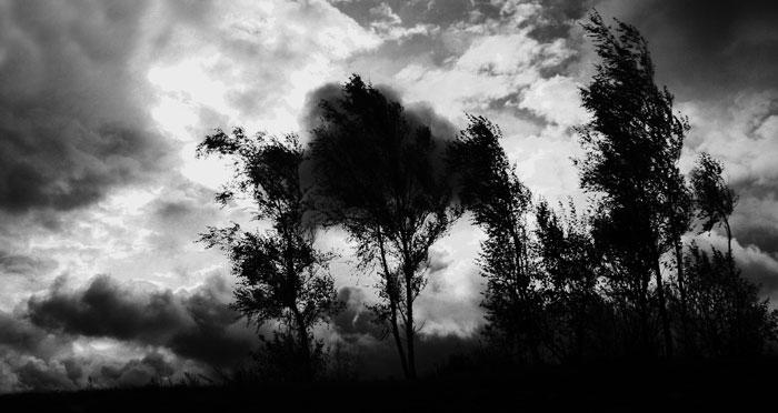 Ветренный день